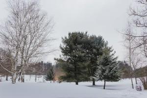 Beaver Meadow Arboretum