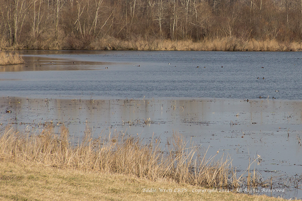 The southwest corner of Cayuga Pool at Iroquois NWR.  Copyright 2014, Eddie Wren.  All rights reserved.