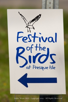 "Audubon's ""Festival of Birds"" weekend at Presque Isle."